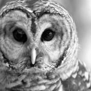 """Bird Portraits"" Through January 4"