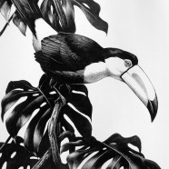 Celebrating Wild America: A Selection of Works by Roger Tory Peterson
