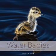 Water Babies Exhibition
