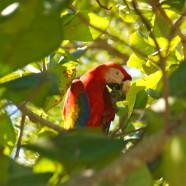 Costa Rica: Curu Wildlife Reserve