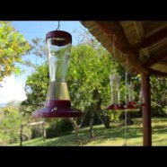 Hummingbird frenzy!