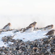 Identify these three winter species