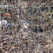 Bird in the brush