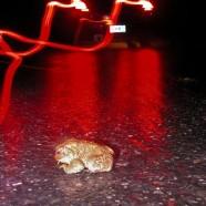 Amphibians emerging