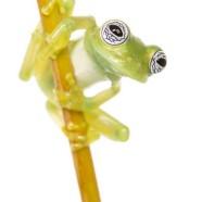 Ghost Glass Frog (Sachatamia ilex) by Twan Leenders