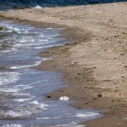 Beach birds and volunteer monitoring