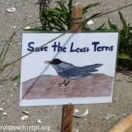 Beach stewardship