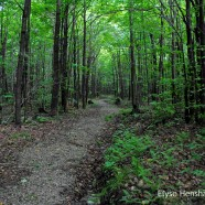 Boutwell Hill State Forest