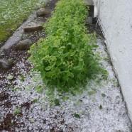 Severe hail Jamestown yard