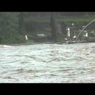 Hurricane/Tropical Storm Irene Sooty Terns
