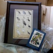 'Painting Birds to Save Them'