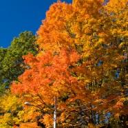 Explosive fall foliage continues