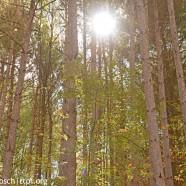 Sunny Pennsylvania woods