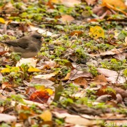 Extremely abundant common sparrows
