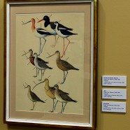 Throwback Thursday – Shorebirds of Texas plate