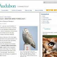 Winter Bird Forecasts with Audubon Connecticut