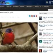 Winter Birding Forecast #2 – Expect the Unexpected