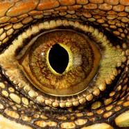 Identify Eye
