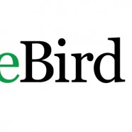 eBird the New Year