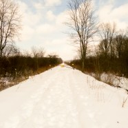 Snowy Akeley Trail