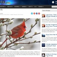 Winter Bird Forecast #5 – Snow Birds