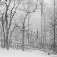 Snowy February