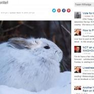 Winter Bird Forecast #8 – Vote for the Conte