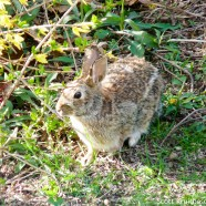 Happy Easter(n) Cottontail!