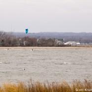 Unintentional Disturbances Threaten Waterbirds
