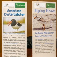 Shorebird Brochures
