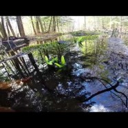 Productive Vernal Pools