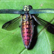 Emerald Ash Borer Awareness Week