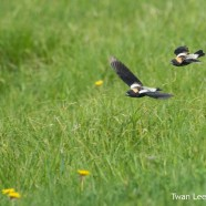 Jamestown Airport Birds