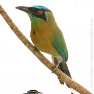 International Migratory Bird Day 2015