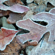 More Frosty Mornings
