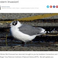 Winter Bird Forecast #1 – Western Invasion!