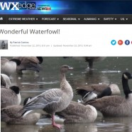 Winter Bird Forecast #2 – Wonderful Waterfowl