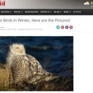 Winter Birds Wrap-up