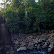 Wall of Rainforest