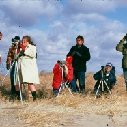 Noble Proctor BioBlitz Challenge at Hammonasset Tomorrow