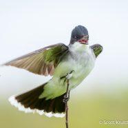 Happy National Bird Day