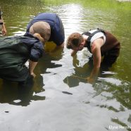 The Hellbender Search Continues