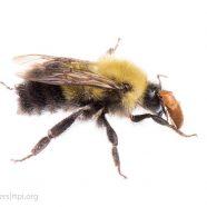 Bumblebee & Beetle