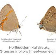 Hairstreak Butterflies