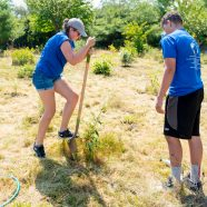 WildLife Guards Planting & Removing