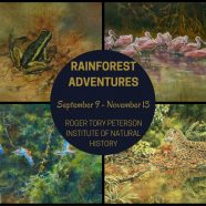 See Rainforest Adventures