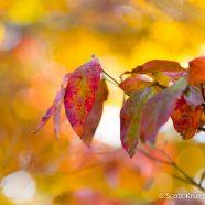 Fantastic Foliage