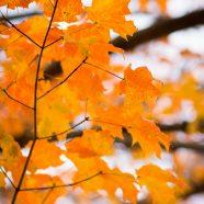 Orange Blaze