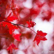 November Foliage