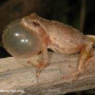 Frog Friday